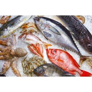 Fisk og Skaldyr